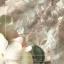 เสื้อเนื้อผ้าออร์แกนซ่า thumbnail 9