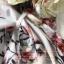จั้ม Suit ขาสั้นโทนสีพาสเทลสไตล์วินเทจ thumbnail 9