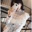 Laser-Cut Cotton Blouse เสื้อผ้าคอตตอนสีขาว thumbnail 3