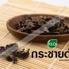 กระชายดำ (Kaempferia parviflora)
