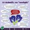 10 ประโยชน์ดีๆ จาก ดอกอัญชัน ลดน้ำตาลในเลือด - ต้านมะเร็ง
