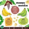 """เรื่องของ """"กล้วย"""" ที่ไม่ใช่กล้วยๆ"""