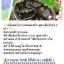 Coffee curcuma scrub soap by..noomham 1 ก้อน thumbnail 157