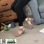 รองเท้าส้นสูงรัดข้อ G12-49-GRY [สีเทา] thumbnail 1