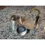 เครื่องต้มกาแฟ GSI Mini Expresso Stainless 1 CUP thumbnail 2