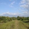 สวนผสม วิวสวย 37 ไร่ เชียงใหม่ &#x2605 37 rai of beautiful gardens mixed views of Chiang Mai &#x2605