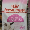 Royal canin First Age Mother & Babycat 2kg หนึ่งถุง 650รวมส่ง