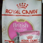 royal canin british shorthair kitten 2kg 700รวมส่ง
