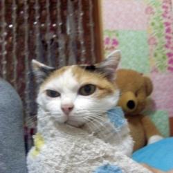 ดูแลแมวแก่ของเราอย่างเข้าใจ