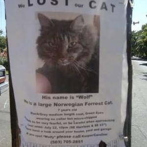 สาเหตุที่แมวหายไป