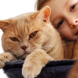เหตุผล 24ข้อ ..ต้องเลี้ยงแมวสักครั้งในชีวิต by Distractify