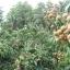 สวนผสม วิวสวย 37 ไร่ เชียงใหม่ &#x2605 37 rai of beautiful gardens mixed views of Chiang Mai &#x2605 thumbnail 13