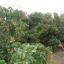 สวนผสม วิวสวย 37 ไร่ เชียงใหม่ &#x2605 37 rai of beautiful gardens mixed views of Chiang Mai &#x2605 thumbnail 12