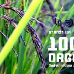 สินค้าเกษตรอินทรีย์100%