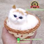 แมวสีขาวหูสีเหลือง นอนหลับในตะกร้าหวาย 12x12 CM [มีเสียง]