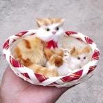 แมว สีเหลืองมีลาย จำลองในตะกร้ากับลูกน้อย 12x15 CM [มีเสียง]