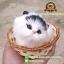 แมวสีขาวหูสีดำ นอนหลับในตะกร้าหวาย 12x12 CM [มีเสียง] thumbnail 1
