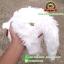ตุ๊กตา แมวขนเปียก Lying Cat สีขาว 12 นิ้ว [Anee Park] thumbnail 4