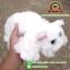 ตุ๊กตา แมวขนเปียก Lying Cat สีขาว 12 นิ้ว [Anee Park] thumbnail 3
