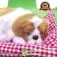 ตุ๊กตาหมานอนหลับ สีเหลืองขาว [เบาะแดง] 19x24 CM thumbnail 1