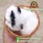 แมวสีขาวหูสีดำ นอนหลับในตะกร้าหวาย 12x12 CM [มีเสียง] thumbnail 2