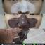 Yu.R Pore Remodeling Mask มาส์กลอกสิวเสี้ยน สะใจ ถอนกระจายถึงราก จากเกาหลี thumbnail 8
