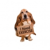 โรคอ้วนในสุนัข