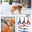 ชุดสายจูงพร้อมที่รัดอก สำหรับสุนัขไซส์ใหญ่ (ส่งฟรี) thumbnail 1