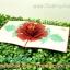 การ์ดป๊อปอัพ ดอกไม้สีแดง thumbnail 1