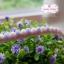 ลูกไม้แต่งตุ้มเล็ก สีม่วงโอรส แบ่งขายเป็นหลา thumbnail 1