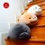 แมวน้ำ อุ๋งๆ นุ่มนิ่ม ยืดหยุ่นกว่า thumbnail 6