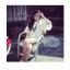 เดรสสั้นเกาหลี คอกลม ลาย V ที่ตัวเสื้อ แขนเสื้อตัดเย็บพองๆ เพิ่มความเลิศหรูให้กับสาวๆ ดีทีเดียว thumbnail 1