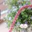 ลูกไม้แต่ง สีชมพูเข้ม แบ่งขายเป็นหลา (90 ซม.) thumbnail 3