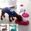 ที่ให้อาหารและน้ำสำหรับสุนัขและแมว thumbnail 1