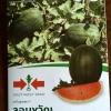 แตงโมแดง จอมขวัญ ตราศรแดง 35เมล็ด