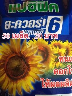 ทานตะวันดอกใหญ่(50เมล็ด)