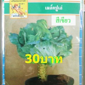 เมล็ดพันธุ์ ปูเล่สีเขียว(ประมาณ70- 100เมล็ด)