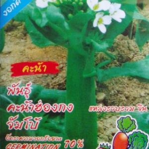 คะน้าฮ่องกง 10กรัม(2000เมล็ด)