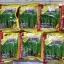 เมล็ดผักบุ้งใบไผ่ ผักบุ้งเรียวไผ่ (1 กก.) thumbnail 1