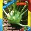 กล่ำปม (โคลาบี้) 5 กรัม thumbnail 1