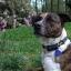 POD Tracker 3 GPS Tracker ค้นหาสัตว์เลี้ยงสำหรับแมวและหมา thumbnail 4