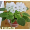 N Robinson - Miniature