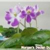 Morgan's Declan Duff - Miniature