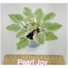 Pearl Joy - Trail Chimera