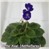 Little Axel - Semiminiature