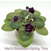 Mac's Sounthern Spring Time - Semiminiature