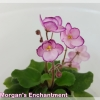 Morgan's Enchantment - Semiminiature