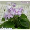 SK Aphrodite - Semiminiature