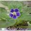 Steppin Stone - Standard thumbnail 1