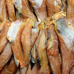 ปลาทูกัง